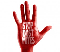 Stop dust mites with air duct cleaning